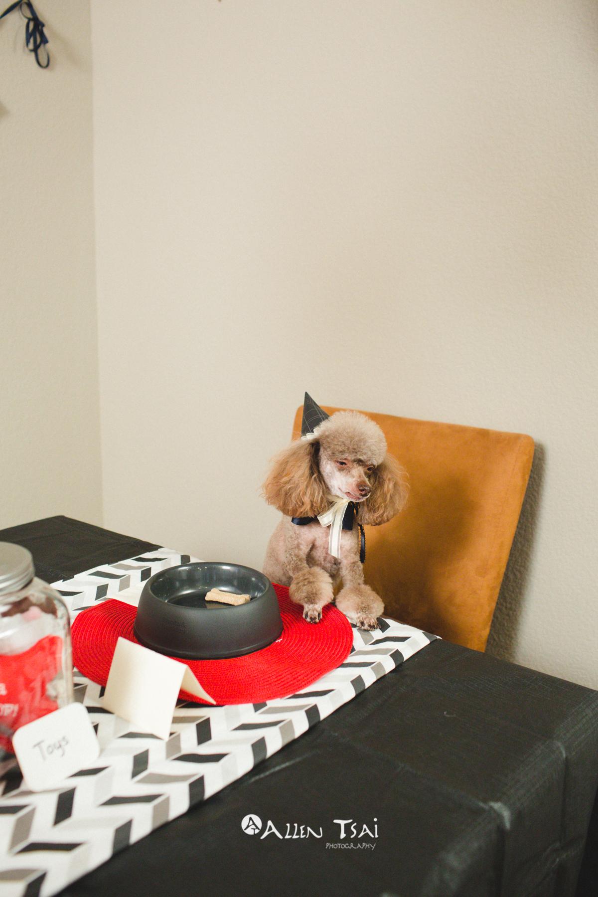 Doggie_Birthday_Party_Web_037