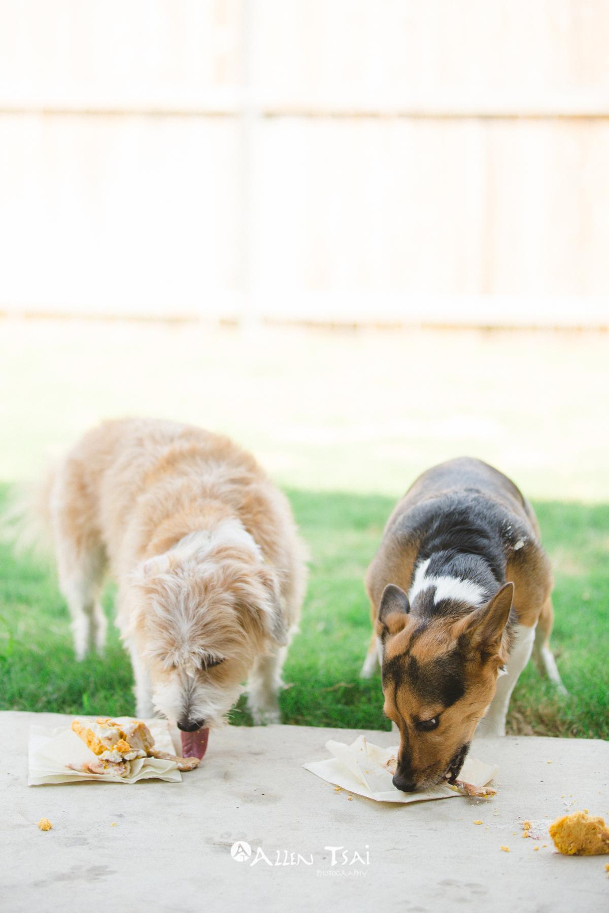 Doggie_Birthday_Party_Web_075