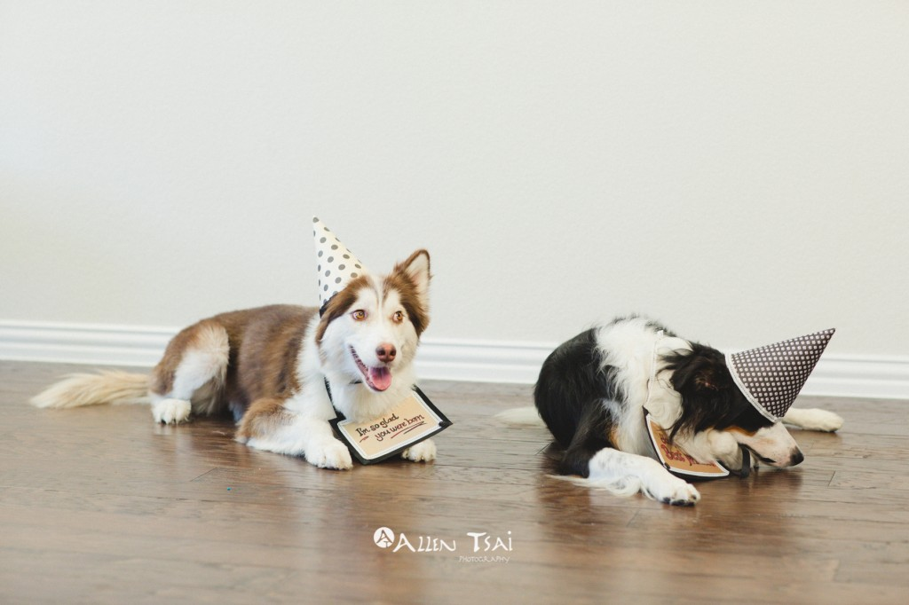 Doggie_Birthday_Party_Web_044